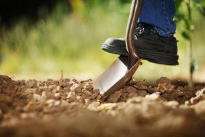 Ogród w listopadzie – o czym warto pamiętać