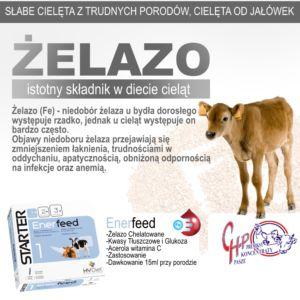 Żelazo – Istotny składnik diety cieląt !