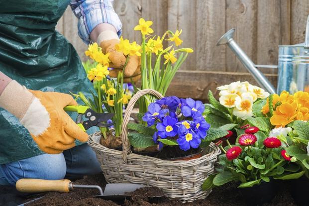 sadzenie_kwiatow_balkonowych_765897