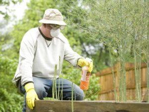 Zabiegi ochrony roślin
