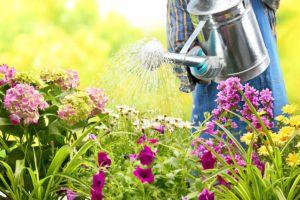 Oszczędzanie wody w ogrodzie