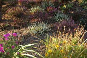 Prace ogrodnicze we wrześniu – Cykl Ogrodnika