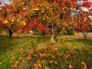 Październik w sadzie