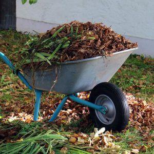 Cykl ogrodnika – Sprzątanie ogrodu po zimie