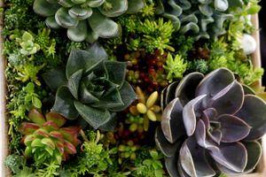 Cykl ogrodnika – Żywe obrazy z roślin