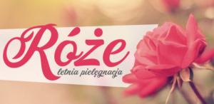 Letnia pielęgnacja róż