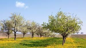 Cykl Ogrodnika: Pielęgnacja sadu we wrześniu