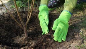 Cykl Ogrodnika: Sadzenie krzewów