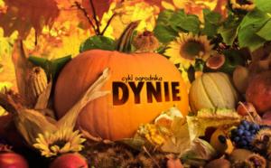 Cykl Ogrodnika – Dynie