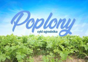 Poplon