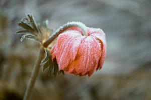 Śnieg i mróz – szkodzą czy pomagają?