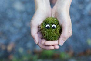 Mech na trawniku – jak sobie z nim poradzić?