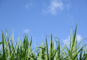 Aeracja trawnika – jak to zrobić?