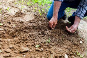 Dobre sąsiedztwo warzyw – jak je sadzić?