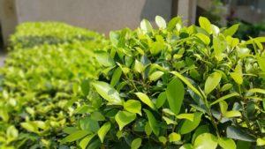 Sadzenie krzewów – co powinieneś wiedzieć?