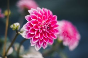 Rośliny cebulowe – jakie możemy teraz posadzić?