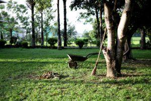 Wapnowanie – czyli jak zmienić pH gleby?