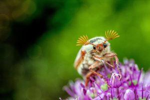 Owady szkodniki w ogrodzie – jak sobie z nimi poradzić?