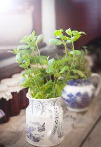 Bazylia i oregano – śródziemnomorskie zioła w twoim domu