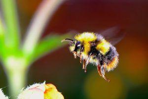 Pszczoły – dlaczego tak bardzo ich potrzebujemy?