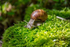 Ślimaki w ogrodzie – jak z nimi walczyć?