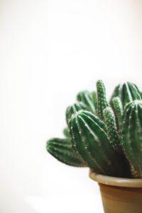 Kaktusy – rośliny, które uwielbiają upały!