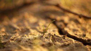 Gdy przychodzi susza – pierwsza pomoc w przypadku nagłych upałów