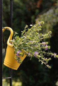 Nawozimy kwiaty doniczkowe