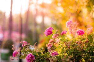 Sierpień w ogródku – jakie roboty nas czekają?