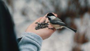 Pomagamy ptakom