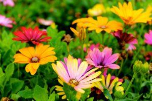 Jakie kwiaty możemy sadzić w marcu?