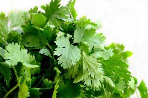 Kolendra – egzotyczna przyprawa w twoim ogrodzie