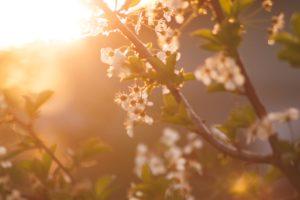 Wiosenne nawożenie drzew owocowych