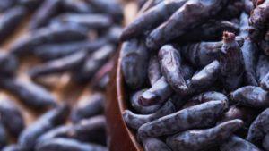 Suchodrzew jadalny – nietypowe jagody