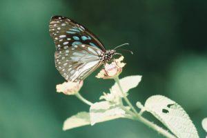Zwabiamy motyle do ogrodu