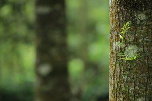 Opaski na drzewa owocowe przeciw szkodnikom