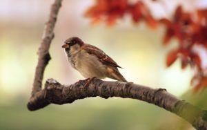 Odstraszanie ptaków
