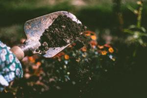 W jaki sposób możemy wykorzystać bakterie w ogrodzie?
