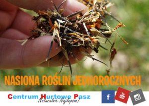 Zbieramy nasiona roślin jednorocznych
