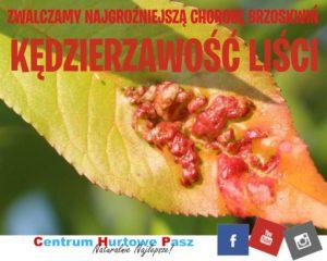Choroba brzoskwiń