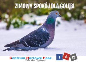 Zimowy spokój dla gołębi