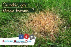 Co robić, gdy żółknie trawnik?