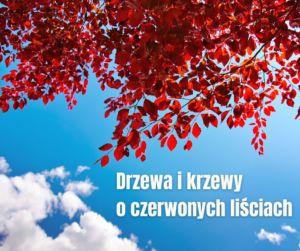 Drzewa i krzewy o czerwonych liściach